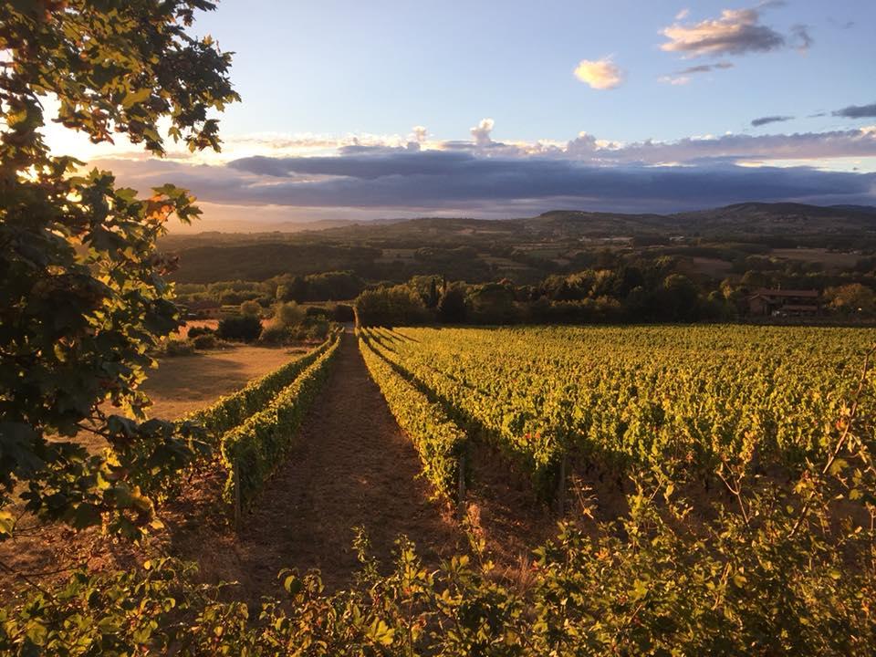 Vos vacances à Charnay au cœur des vignes du beaujolais